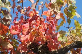 orto felice, foglie rosse autunno 2020 (7)