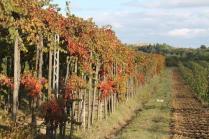 orto felice, foglie rosse autunno 2020 (8)
