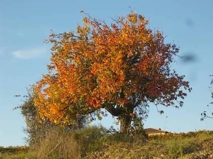 pero autunno berardenga 2020 (1)