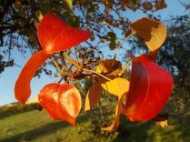 pero autunno berardenga 2020 (10)