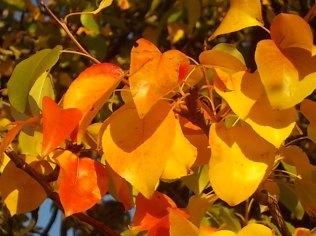 pero autunno berardenga 2020 (11)