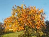 pero autunno berardenga 2020 (2)