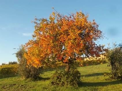pero autunno berardenga 2020 (3)