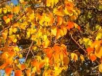pero autunno berardenga 2020 (4)
