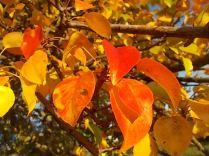 pero autunno berardenga 2020 (5)