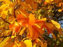 pero autunno berardenga 2020 (6)