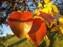 pero autunno berardenga 2020 (7)