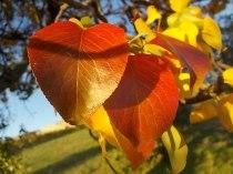 pero autunno berardenga 2020 (8)