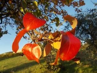 pero autunno berardenga 2020 (9)