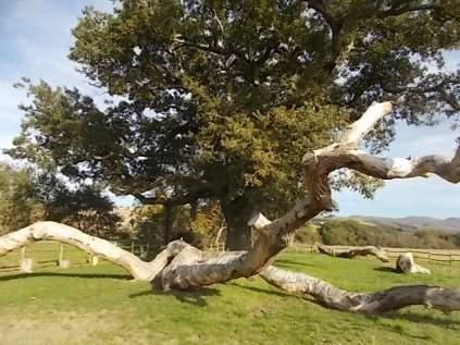quercia delle checche e nipote (1)