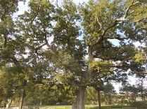 quercia delle checche e nipote (2)