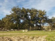 quercia delle checche e nipote (3)