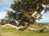 quercia delle checche e nipote (6)