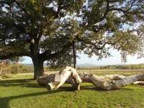 quercia delle checche e nipote (8)