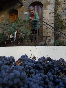 vertine vendemmia 2020 (12)