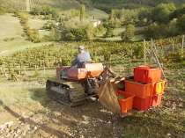 vertine vendemmia 2020 (17)
