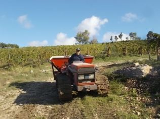 vertine vendemmia 2020 (27)