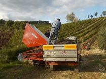 vertine vendemmia 2020 (29)