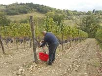 vertine vendemmia 2020 (36)