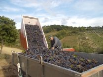vertine vendemmia 2020 (42)