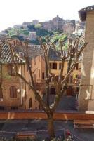 capitozzatura piante vicolo della fortuna siena (2)