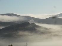 vertine foschia, nebbia, orto (2)