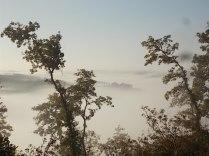 vertine foschia, nebbia, orto (5)