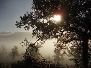 vertine foschia, nebbia, orto (7)
