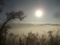 vertine foschia, nebbia, orto (8)