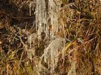 gelo vigna gennaio 2021 (2)