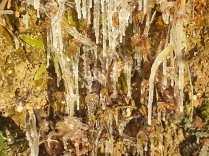 gelo vigna gennaio 2021 (5)
