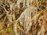 gelo vigna gennaio 2021 (7)