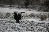 montegrossi neve 10 gennaio 2021 (1)