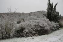 montegrossi neve 10 gennaio 2021 (5)