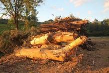 trucioli di bosco (3)