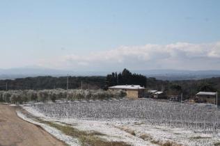 berardenga neve febbraio 2021 (10)