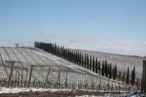 berardenga neve febbraio 2021 (4)