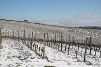 berardenga neve febbraio 2021 (5)