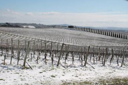 berardenga neve febbraio 2021 (6)