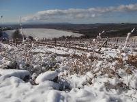 brolio podernovi neve febbraio 2021 (2)