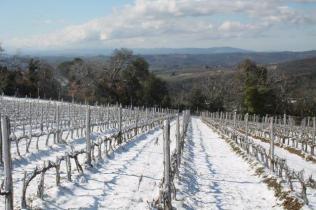 brolio podernovi neve febbraio 2021 (6)