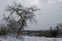 vertine neve febbraio 2021 (13)