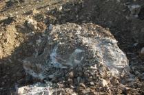 vigna grande salvino scasso febbraio 2021 (7)
