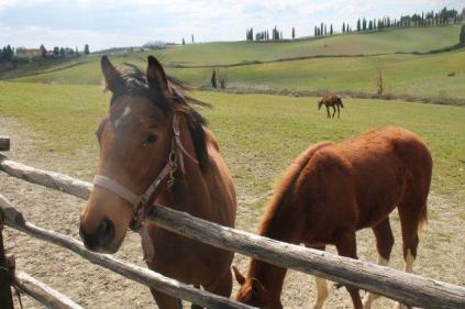 cavalli san piero in barca (3)