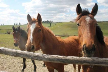 cavalli san piero in barca (5)