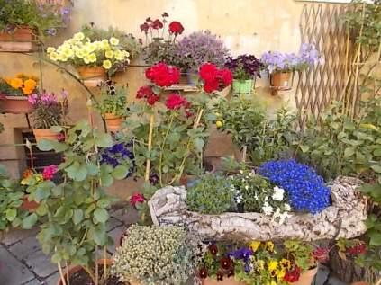 giardino piazza santo spirito siena (2)