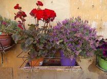 giardino piazza santo spirito siena (8)