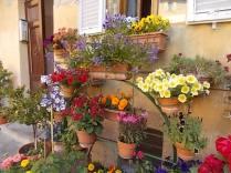 giardino piazza santo spirito siena (9)