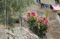 rapolano,san vittore,rose, rondine, amore (11)