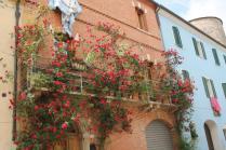 rapolano,san vittore,rose, rondine, amore (2)